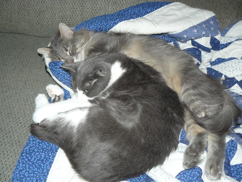 Sleeping cats 2